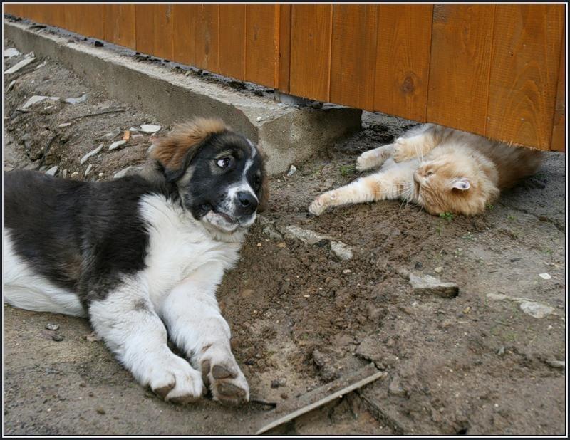 Картинки про собак смешные с надписью