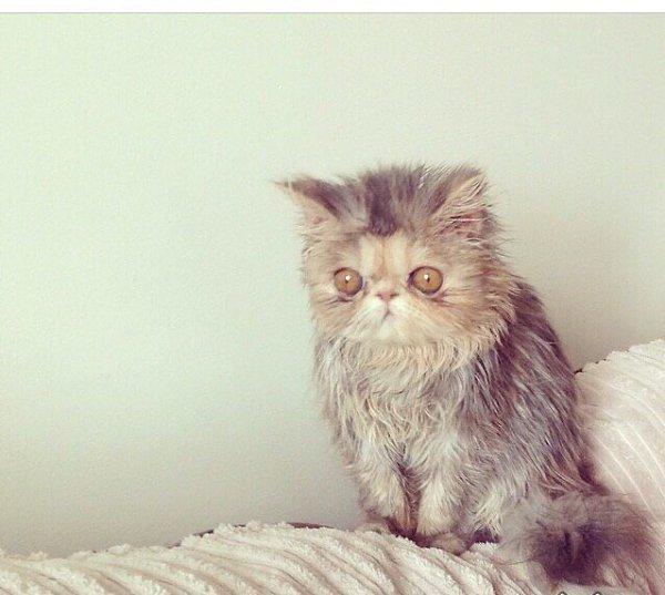 Картинки я проснулась прикольные, котами