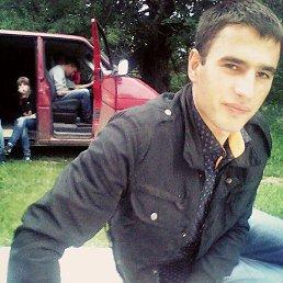 Вова, 27 лет, Немиров