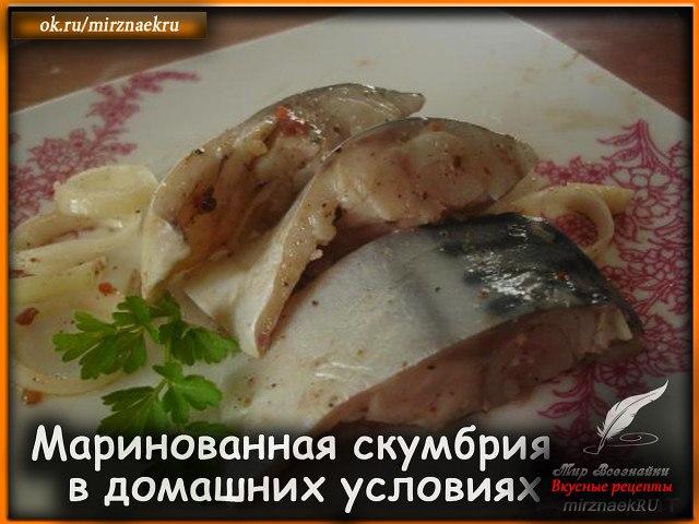 Думаю, многие любят вкусную маринованную скумбрию, но не все умеют ее готовить. Хотелось бы ...