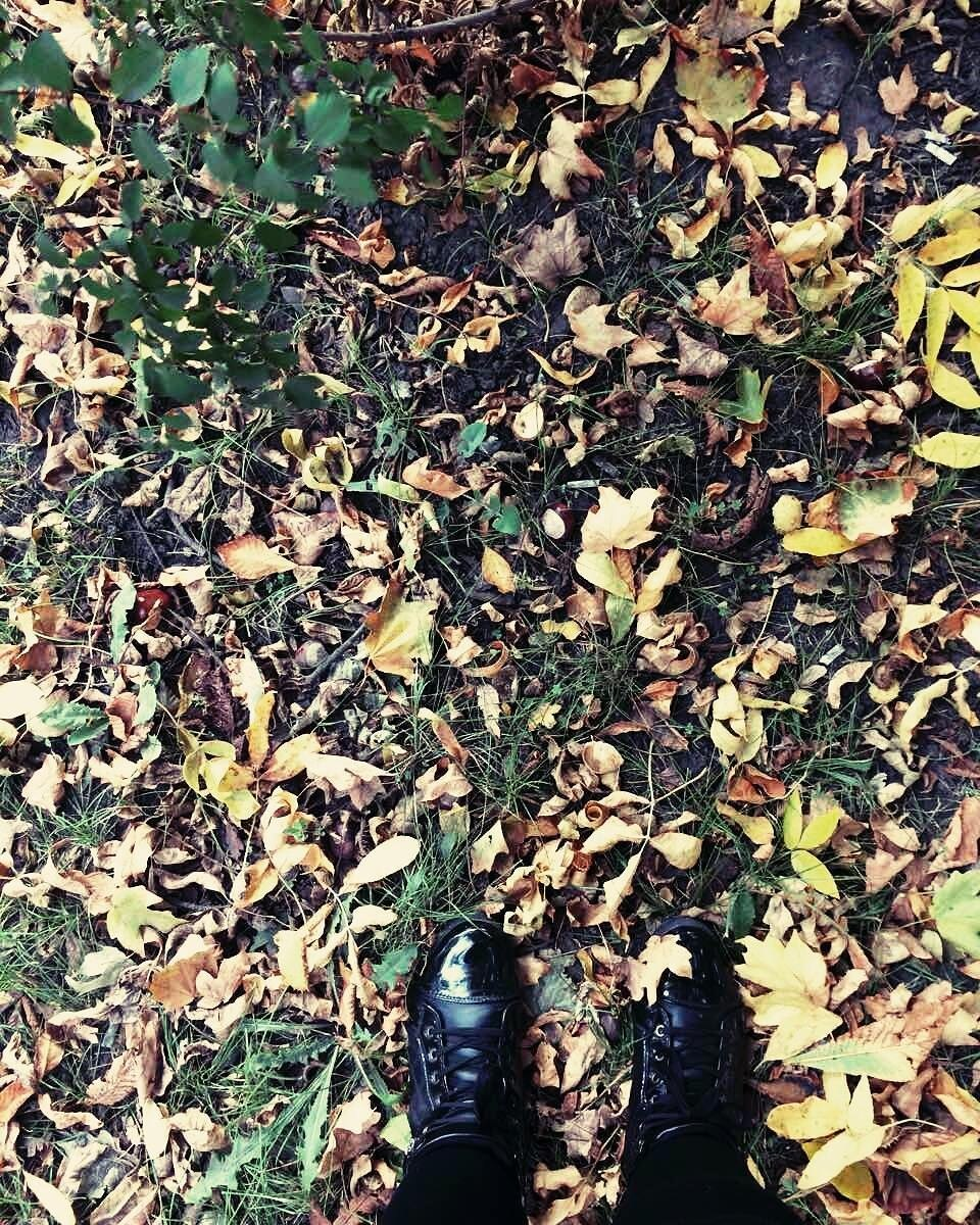 The trees are about to show us how lovely it is to let things go.#autumn #leaves #fall #autumnishere