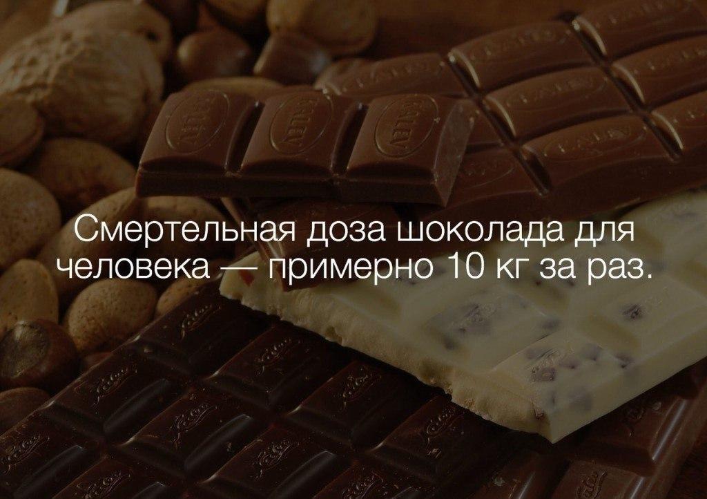 Смешные картинки про шоколад