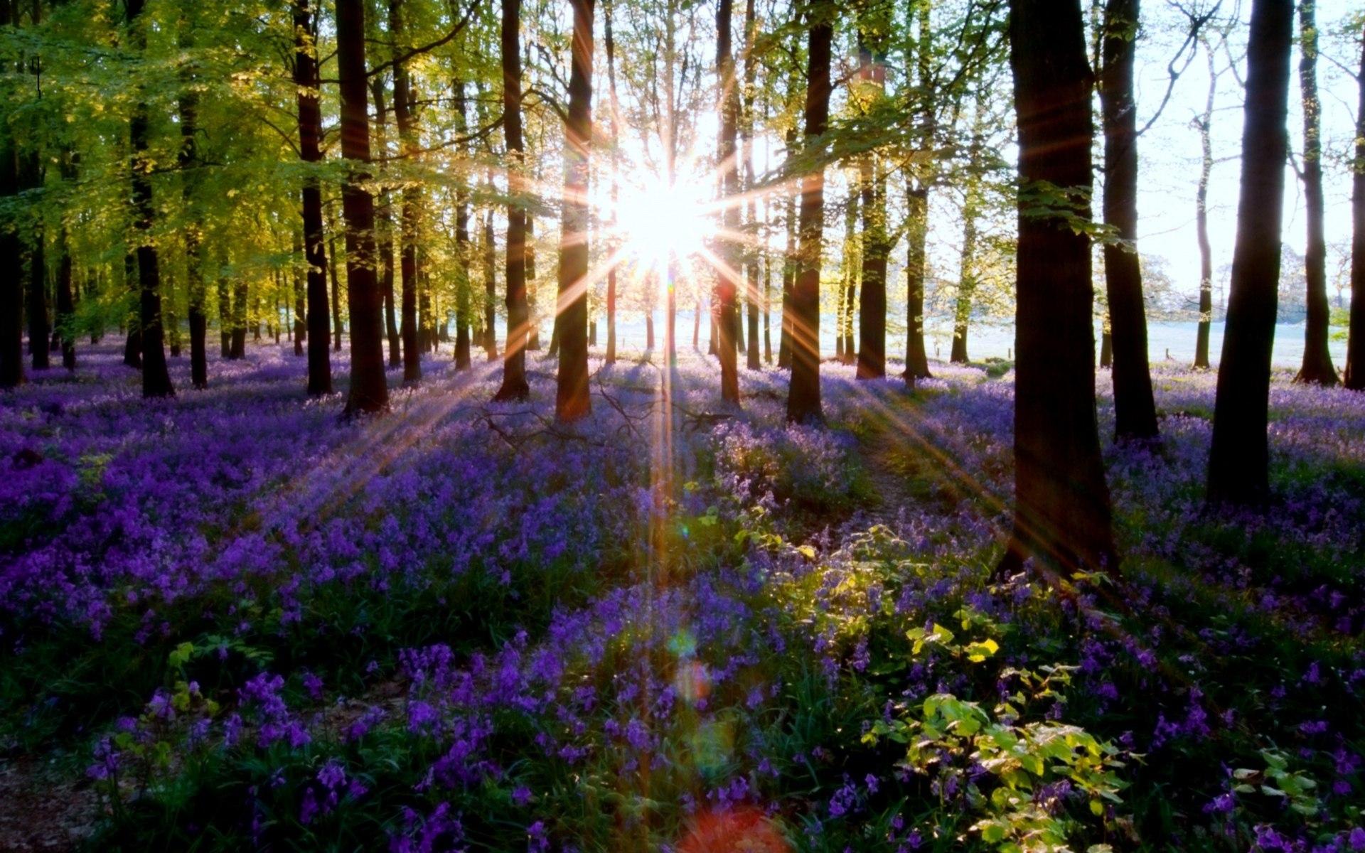 картинки весна утро красота ибисы крупными стаями