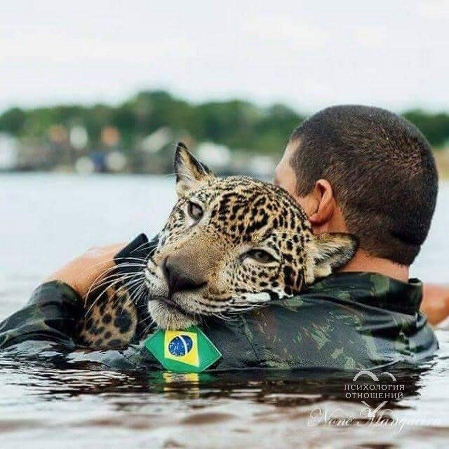 Солдат бразильской армии со спасенным от наводнения ягуаром.