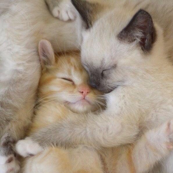 пермский картинки с котятами обнимашки места полезны для