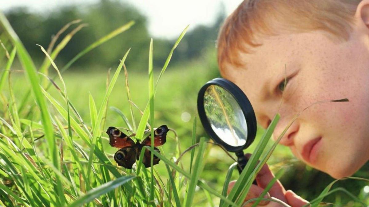 Человек и насекомые картинки