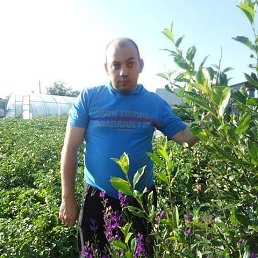 Дмитрий, 33 года, Далматово