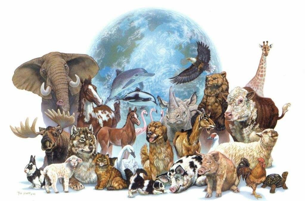Картинки где планета защищает животных