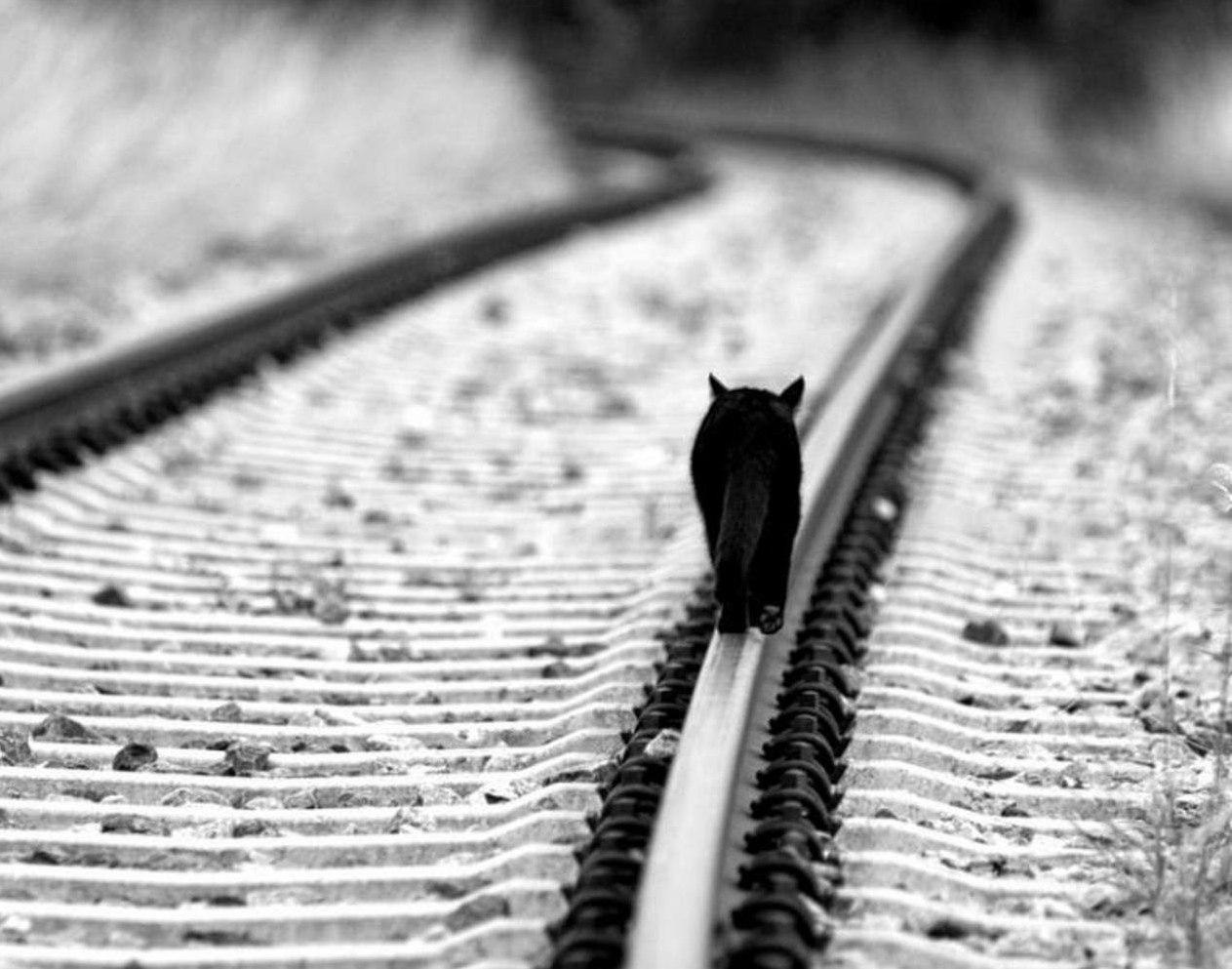 кошка по рельсам картинки разобрать тех