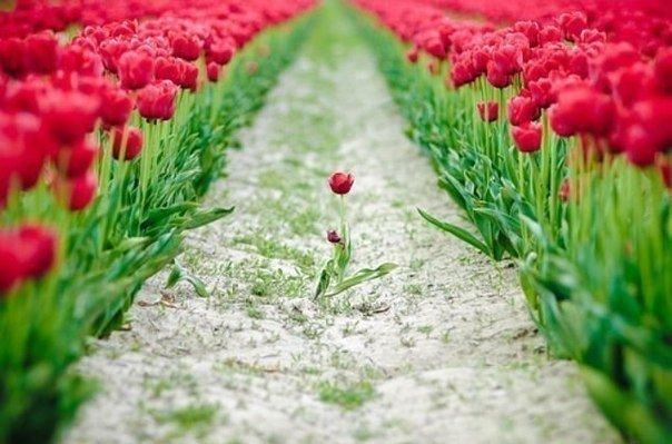 Смотрите вперед с надеждой, назад с благодарностью, вверх с верой, по сторонам с любовью.