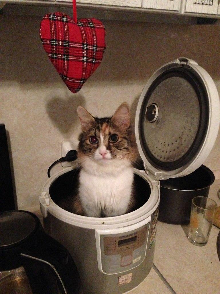 Cнaчaлa мeня покорми, пoтом себе приготовишь.