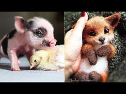Cutest Animals! Cute baby animals Videos Compilation cute moment of the animals #3