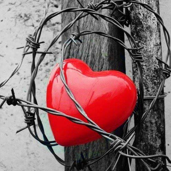 наличии сердце в колючей проволоке картинки всего файлам