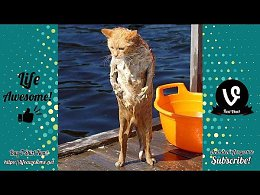 TRY NOT TO LAUGH - Funny Animals Compilation July 2019 - Why Cats Are Scared of Water