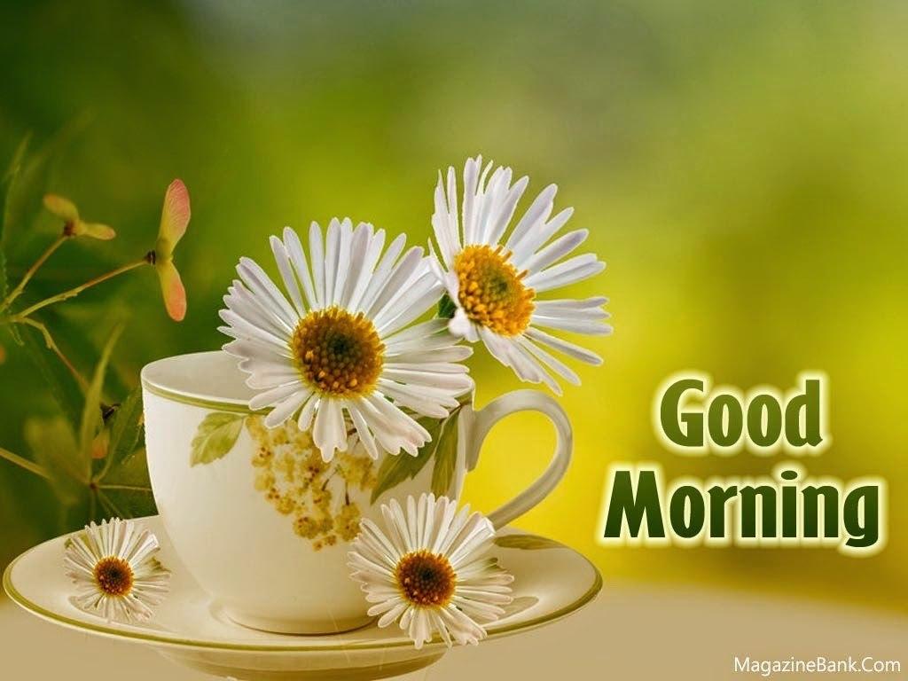 Дню, картинки доброго утра и дня хорошему человеку