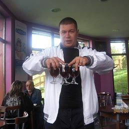 Андрей, 37 лет, Берегово