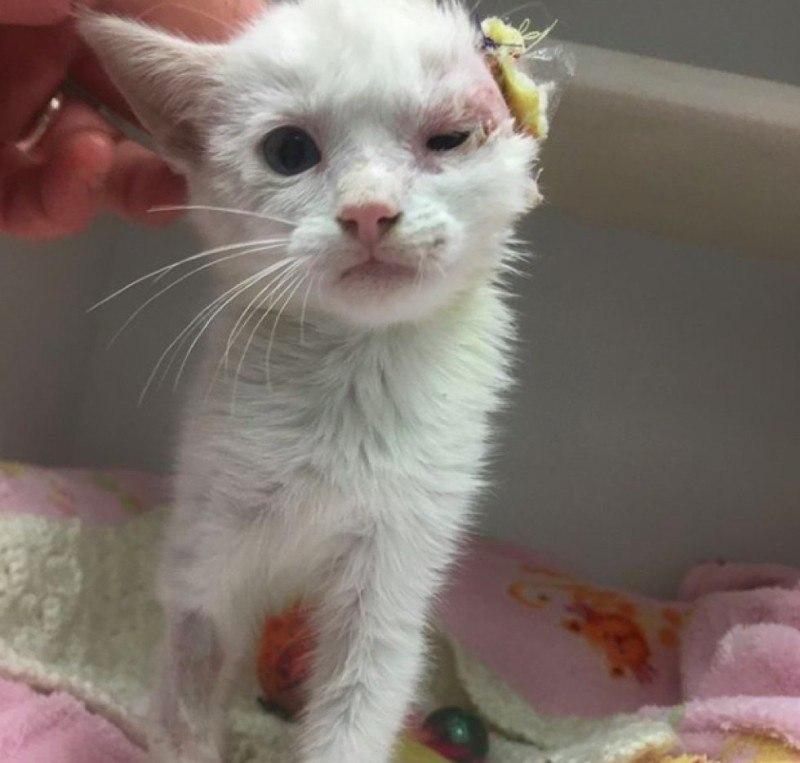 Спасение котенка по клички Веспер и ее преображение из гадкого утенка в изящную кошку. И все ...
