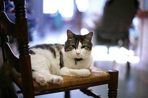 Ocкар кот, который видит смерть. В дом престарелых города Провиденс (США) Оскар попал еще котенком, ...
