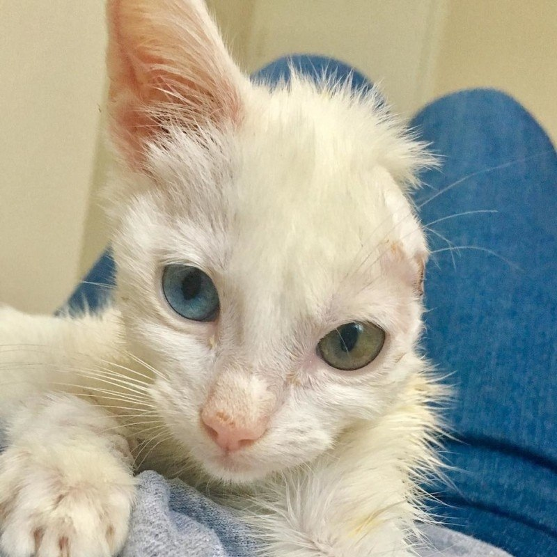 Спасение котенка по клички Веспер и ее преображение из гадкого утенка в изящную кошку. И все ... - 2