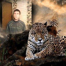 Андрей, 29 лет, Кострома