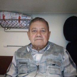 Миша, 66 лет, Сокол