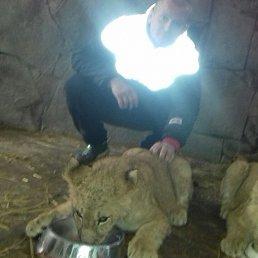 Егор, 28 лет, Бердянск