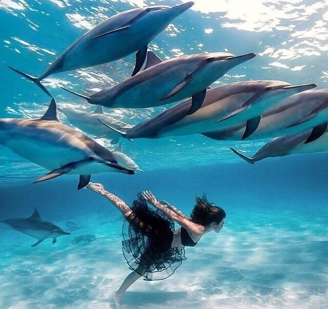 Хотели бы поплавать с дельфинами?