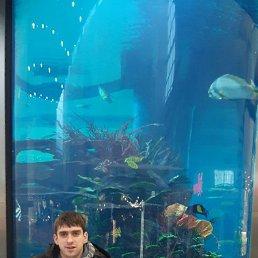 АРСЕНИЙ, 27 лет, Зеленоградск