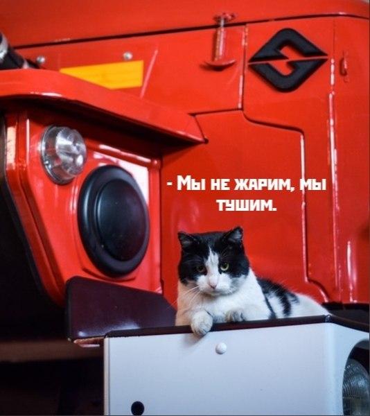 Без кота и жизнь не та - 16 октября 2020 в 19:47 - 4