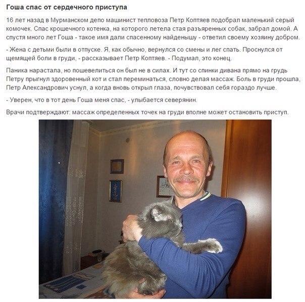 Коты Герои!спасшие человеческие жизни! - 6