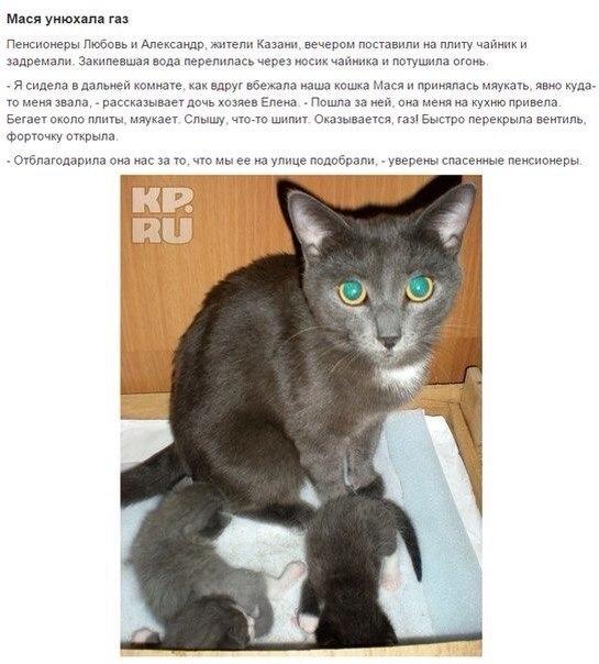 Коты Герои!спасшие человеческие жизни! - 7