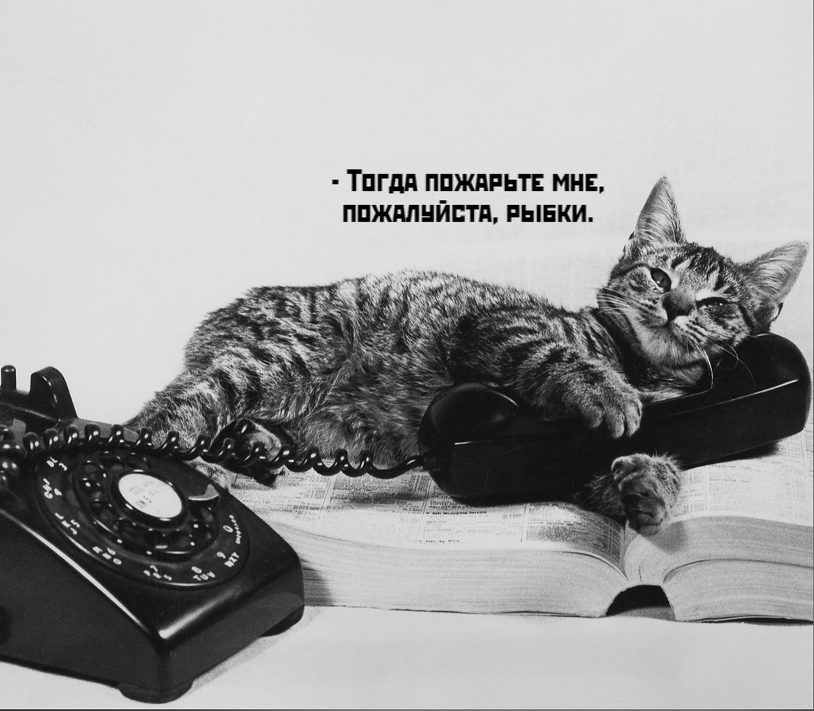 Без кота и жизнь не та - 16 октября 2020 в 19:47 - 3