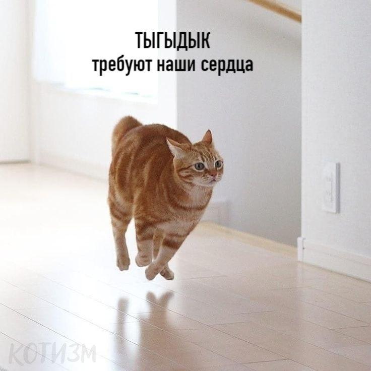 Цой по-котовски