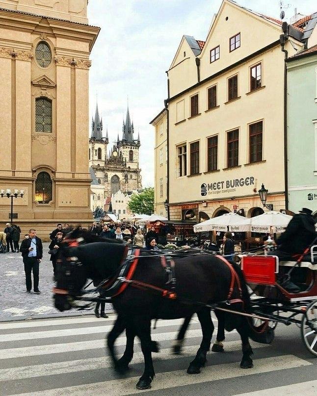 Посадите меня в самолет и отправьте в Прагу, пожалуйста! - 9