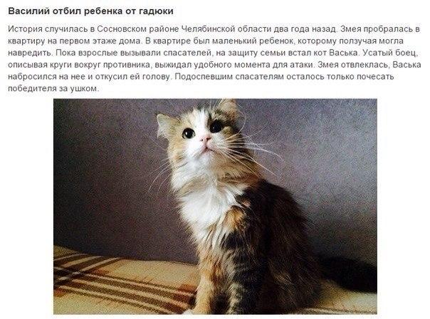 Коты Герои!спасшие человеческие жизни! - 8