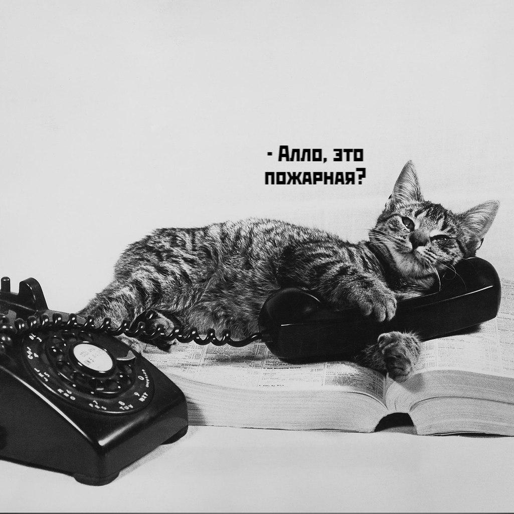 Без кота и жизнь не та - 16 октября 2020 в 19:47