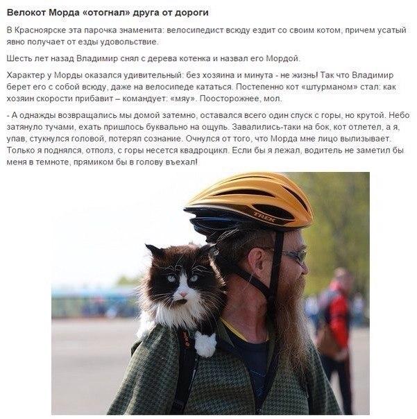 Коты Герои!спасшие человеческие жизни! - 5