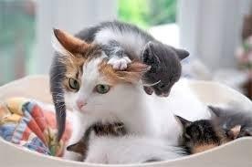 Кошки, осознавшие всю безысходность ситуации...