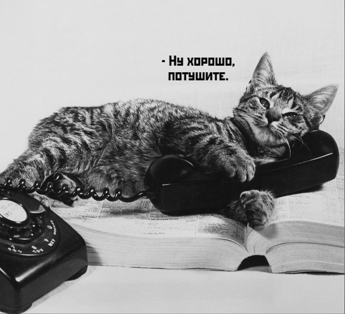 Без кота и жизнь не та - 16 октября 2020 в 19:47 - 5