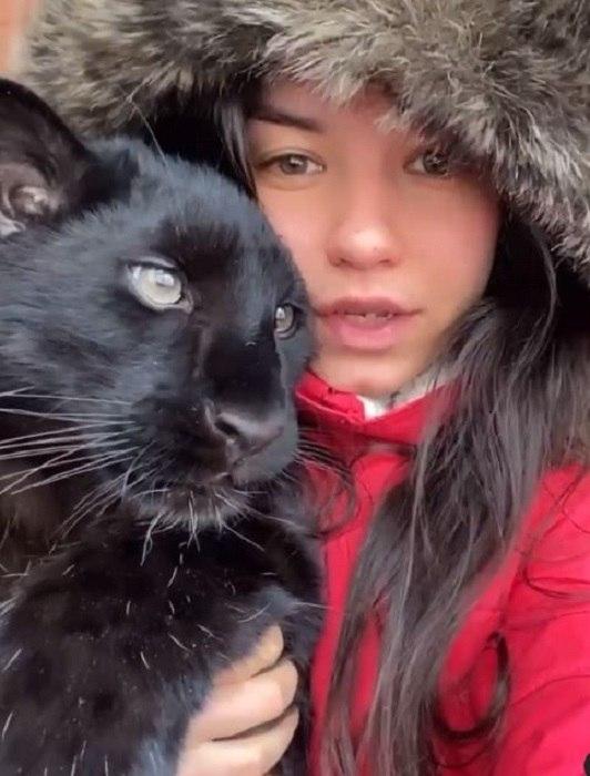 Чёрная домашняя пантера у девушки из Сибири очаровала интернет. Эта очаровательная, черная как смоль ... - 2