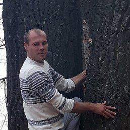 Александр, 31 год, Тюмень