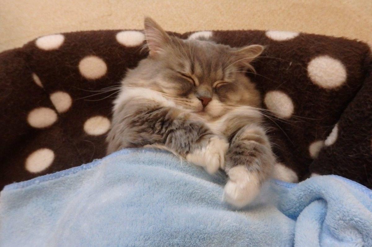 Под мягким, тёплым одеялком не только людям снятся самые замечательные сны! - 4