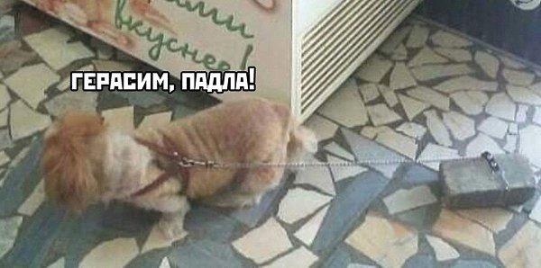 Теперь собака замочит хозяина - 2
