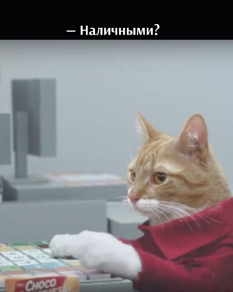 Без кота и жизнь не та - 14 июля 2021 в 19:06