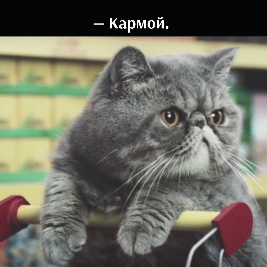 Без кота и жизнь не та - 14 июля 2021 в 19:06 - 2