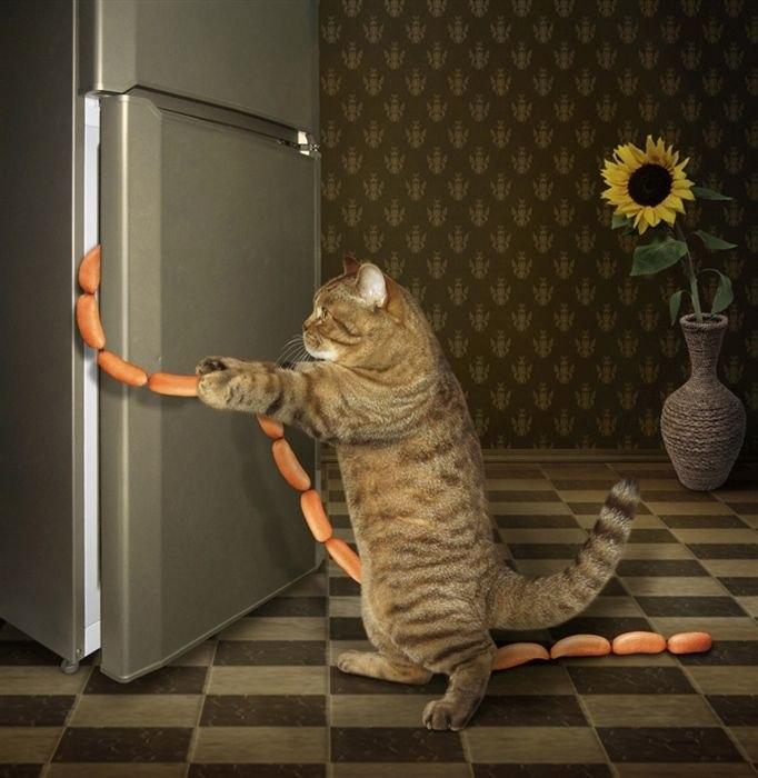 И даже если все двери в мире перед тобой закрыты, знай, дверь холодильника открыта всегда!