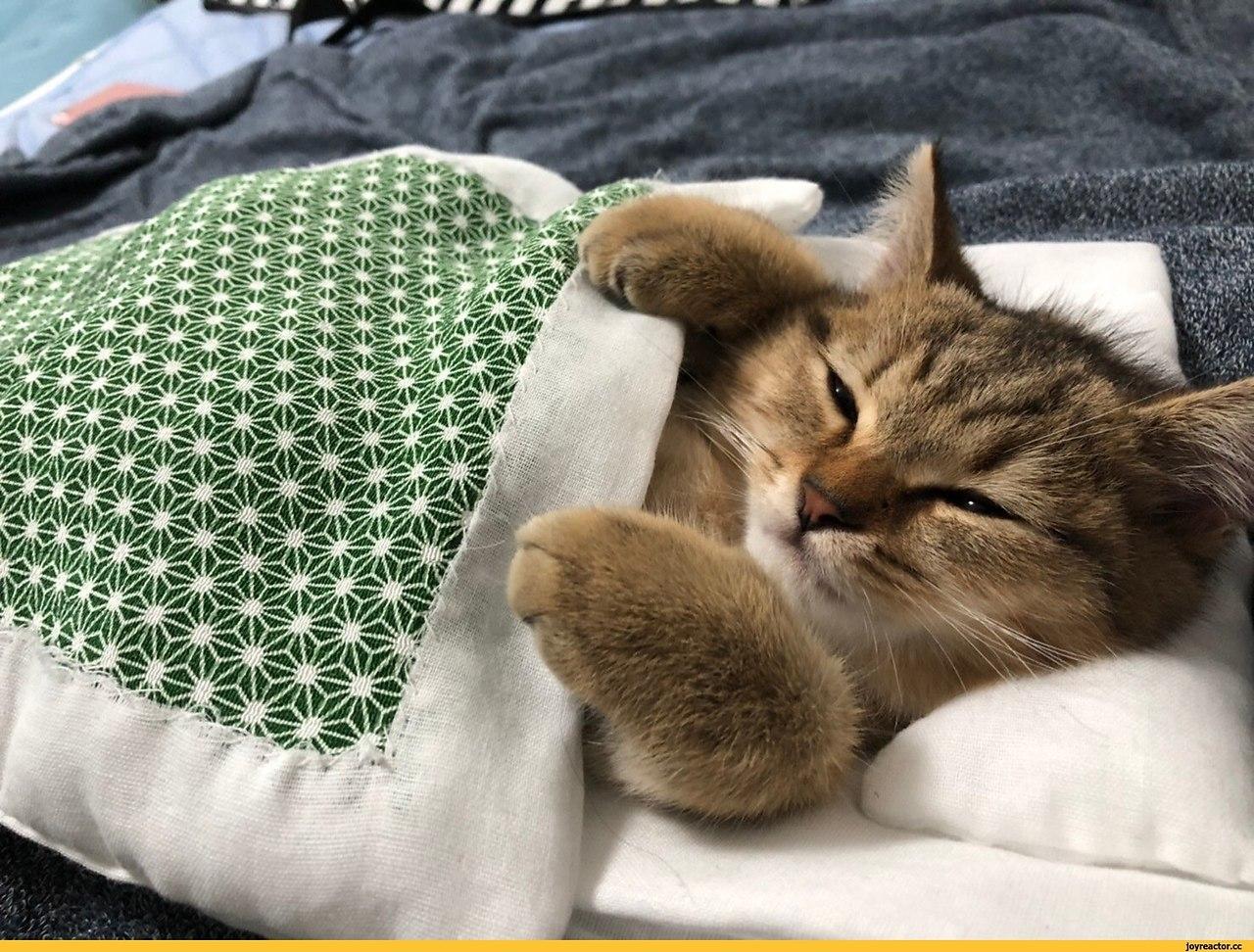 Под мягким, тёплым одеялком не только людям снятся самые замечательные сны! - 2